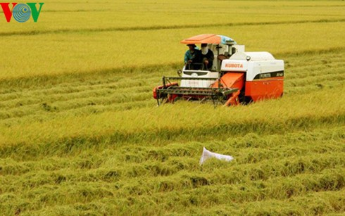 Vietnam aims to earn global reputation for rice quality  - ảnh 1