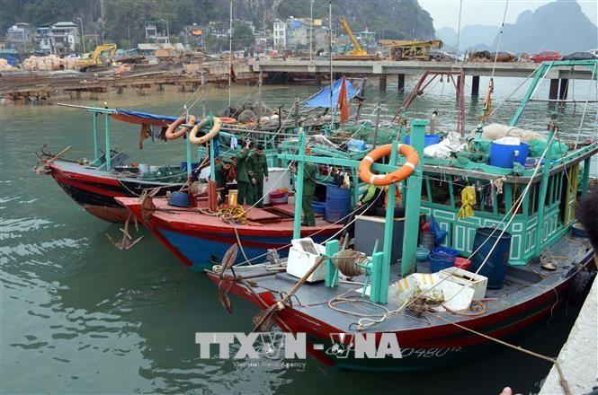 Fishing to be banned at Ha long Bay - ảnh 1