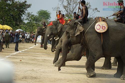 Elephant race draws huge crowds to Central Highlands district  - ảnh 1