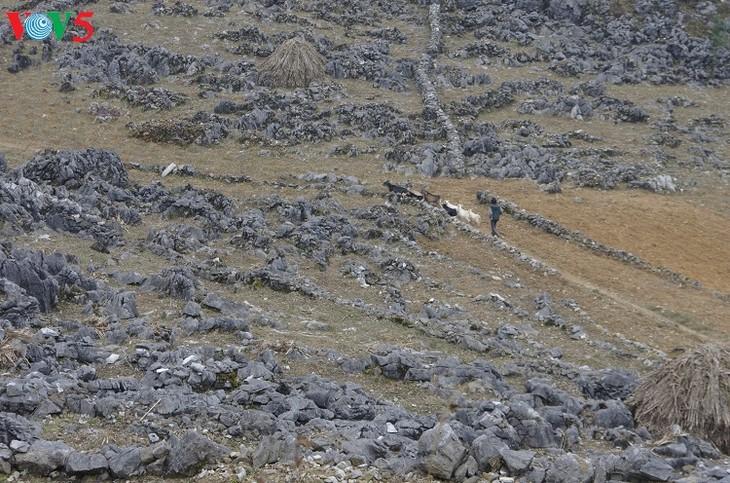 ค้นคว้าเขตที่ราบสูงหินด่งวัน แหม่วหวาก จังหวัดห่ายาง - ảnh 3