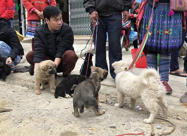 เที่ยวตลาดบั๊ก ห่า หาซื้อสุนัขพันธุ์พื้นเมืองของเผ่าม้ง - ảnh 2