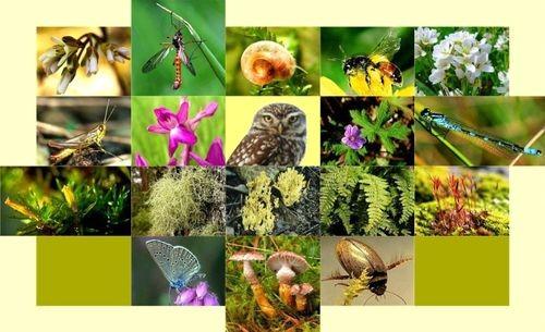 成立承担制定国家生物多样性保护规划任务的评估委员会 - ảnh 1