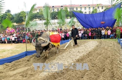 Viele Bauern-Feste zum Jahresanfang - ảnh 1