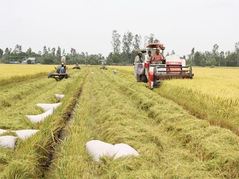 Nachhaltige Entwicklung der Genossenschaften durch Zusammenarbeit - ảnh 1