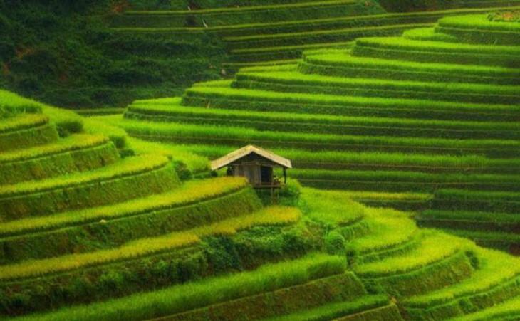 Mu Cang Chai ist eine der buntesten Landschaften weltweit - ảnh 2