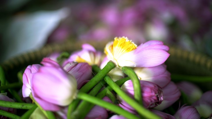 Aroma von Lotusblüten im Tee - ảnh 10