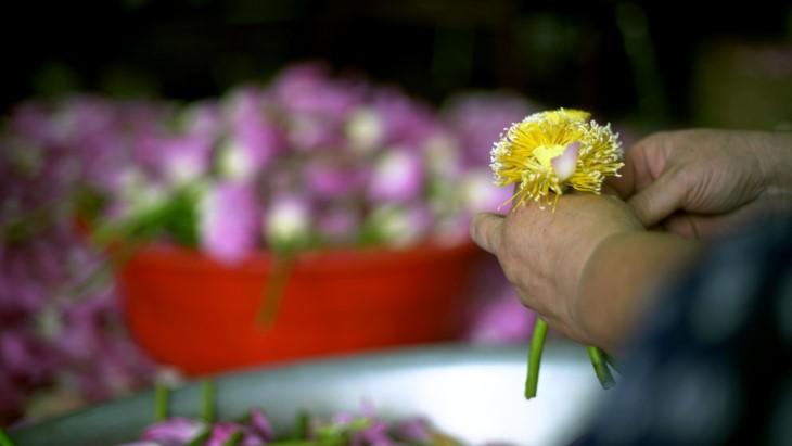 Aroma von Lotusblüten im Tee - ảnh 11
