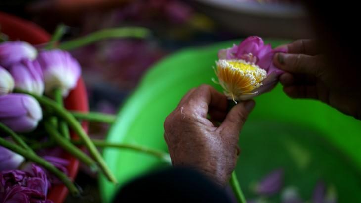 Aroma von Lotusblüten im Tee - ảnh 12