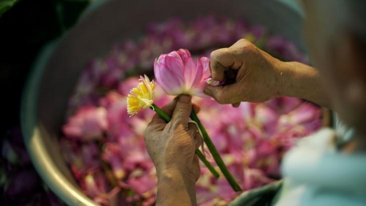 Aroma von Lotusblüten im Tee - ảnh 13