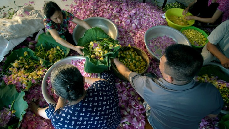 Aroma von Lotusblüten im Tee - ảnh 16