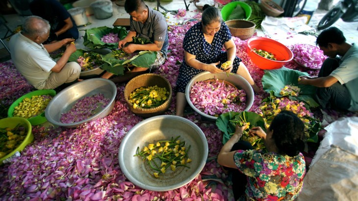 Aroma von Lotusblüten im Tee - ảnh 17