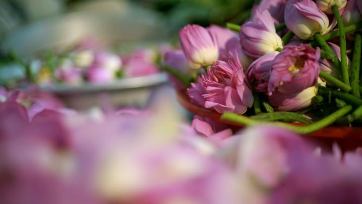 Aroma von Lotusblüten im Tee - ảnh 18