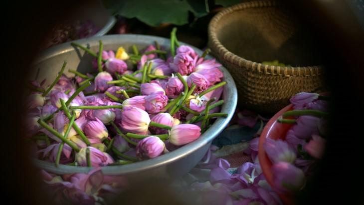 Aroma von Lotusblüten im Tee - ảnh 19