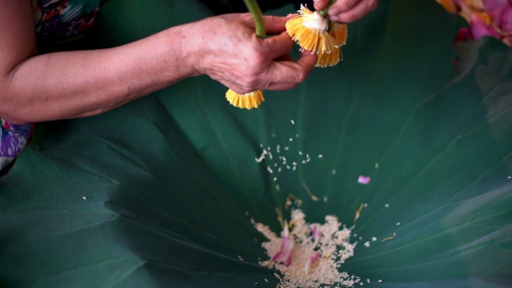 Aroma von Lotusblüten im Tee - ảnh 20