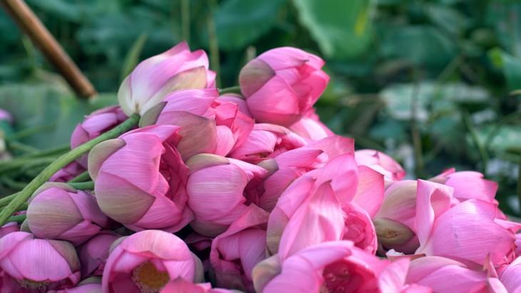 Aroma von Lotusblüten im Tee - ảnh 8