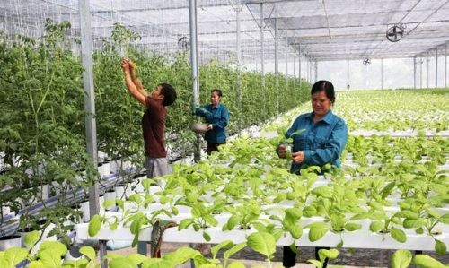 Tansania wünscht sich vietnamesische Hilfe in der Landwirtschaft - ảnh 1