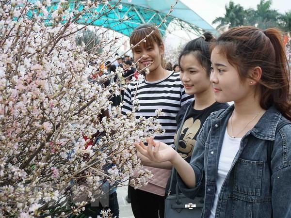 벚꽃 축제를 베트남- 일본 문화 교류 축제로 - ảnh 1