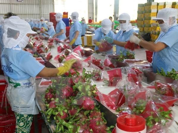 Vietnam envía primer lote de pitahaya a Australia - ảnh 1