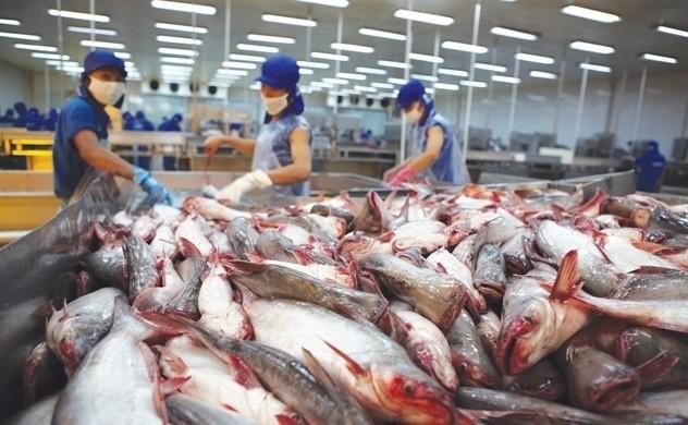 Vietnam proyecta ingresar 2400 millones de dólares por ventas de pescado Tra en 2019 - ảnh 1