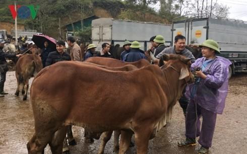 Tra Linh, el mayor mercado de ganado del norte de Vietnam - ảnh 2