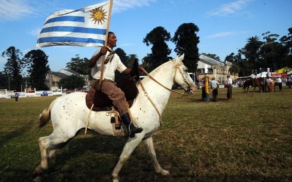 Exportan caballos uruguayos a Singapur - ảnh 1