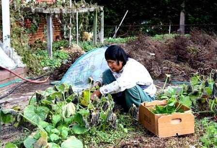 Cho Vuon, mercado de hortalizas vietnamitas en centro de Washington - ảnh 6
