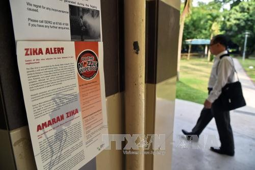 Zika cases increase in Singapore - ảnh 1