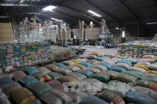 베트남 정부 중부, Tay Nguyen지역 성 10,000톤 쌀 지원 - ảnh 1