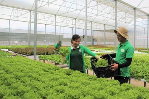 첨단 농업 개발 - 문제와 해결책 - ảnh 1