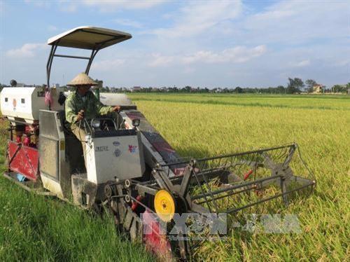 타이빈, 농업 경제 발전 - ảnh 1