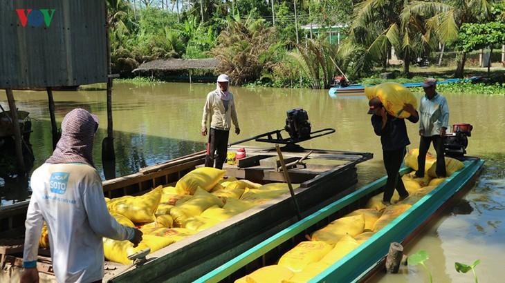 베트남 쌀 생산의 새로운 비전 - ảnh 1