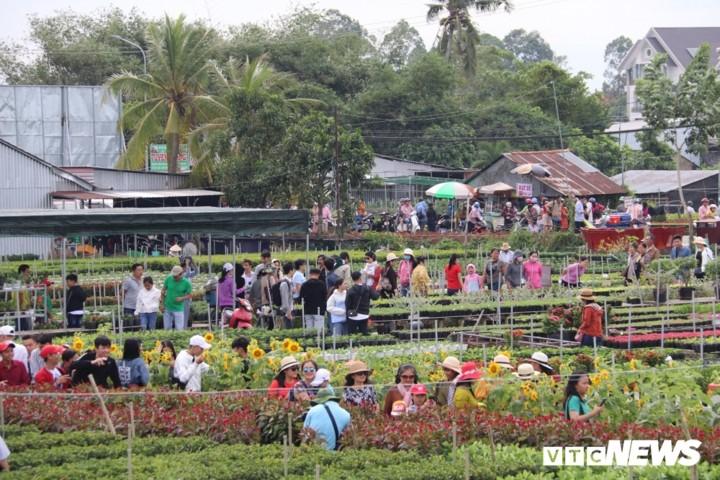 Les villages horticoles à l'approche du Têt - ảnh 2