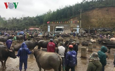 Trà Linh, le plus grand marché aux bestiaux du Nord - ảnh 1