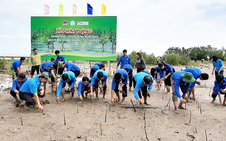 Cà Mau: planter les mangoves pour protéger les côtes - ảnh 1