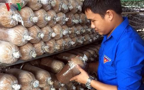 О Буй Минь Тханге, который преуспел в выращивании грибов - ảnh 1