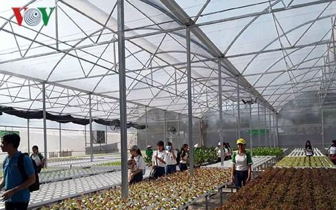 서부지역 여성 사업가의 수경 채소 재배 모델의 파급력 - ảnh 1