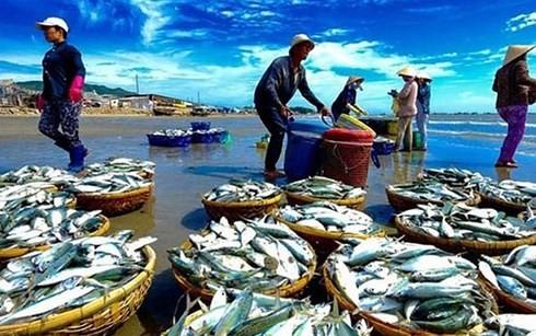 베트남, 어업의 지속 가능한 발전을 위해 EC 권장 사항 단계적으로 완성 - ảnh 1
