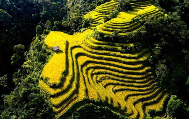 벼 익는 계절에 황쑤피 (Hoàng Su Phì)유산지의 독특한 문화 체험 - ảnh 1