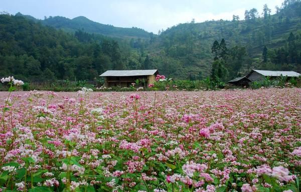 베트남 하짜잉의 아름다움을 탐구하자! - ảnh 4