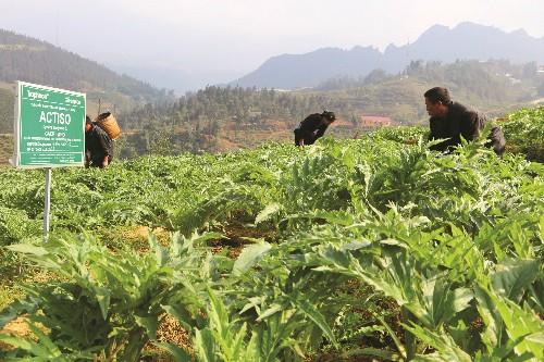 트라파코(Traphaco), '녹색 건강 노선' 상의 지속 가능한 발전 - ảnh 1