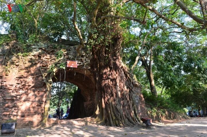 선떠이 고성 – 하노이의 독특한 역사 유적지 - ảnh 3