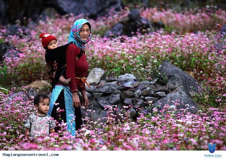 동반 돌고원에 벚꽃축제 - ảnh 1