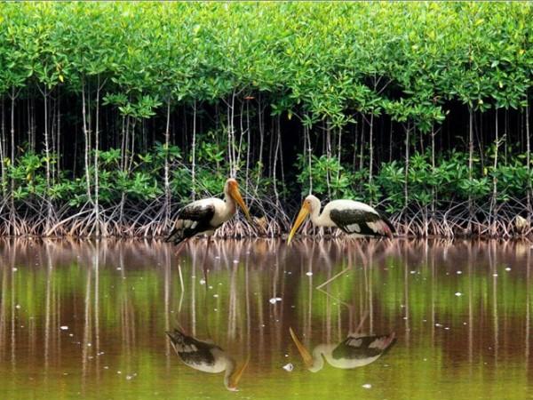 베트남 보호-보존구역 녹색목록 - ảnh 1