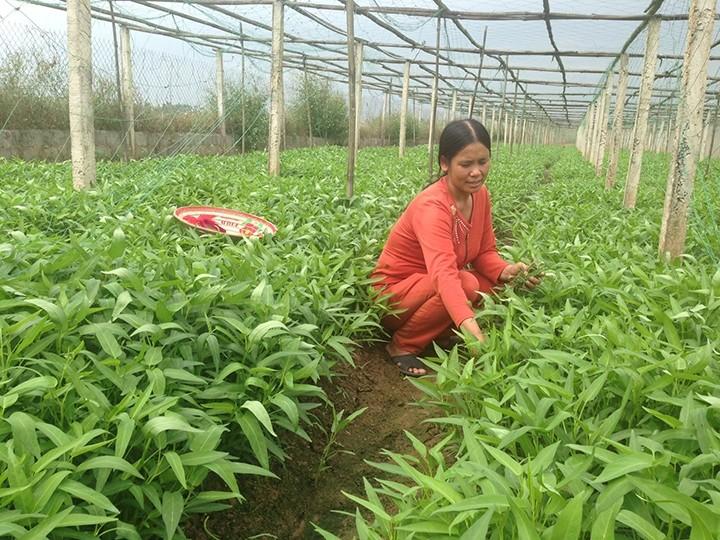 베트남 농민회와 국제농업개발기금 간 협력결과 공유워크숍 - ảnh 1