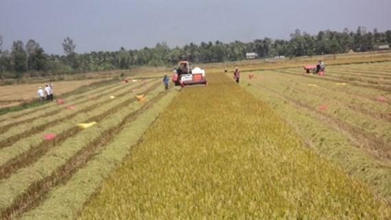 Thúc đẩy ứng dụng công nghệ cao vào sản xuất nông nghiệp tiểu vùng Tứ giác Long Xuyên  - ảnh 1