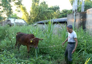 Развитие внутренних ресурсов для строительства новой деревни на бывшей революционной базе Танчао - ảnh 2