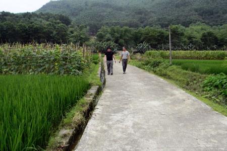 Развитие внутренних ресурсов для строительства новой деревни на бывшей революционной базе Танчао - ảnh 3