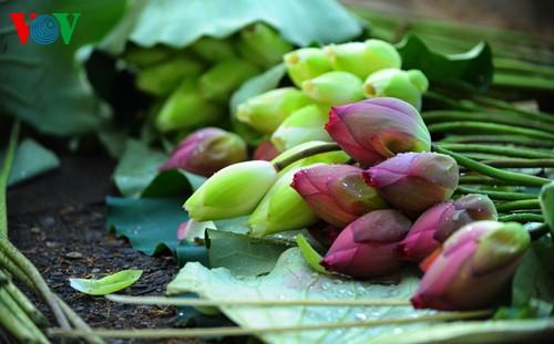 Приезжаем в Хюэ полюбоваться цветами лотоса - ảnh 11
