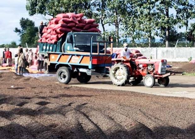 Крестьяне отдают часть своей земли для строительства новой деревни - ảnh 4