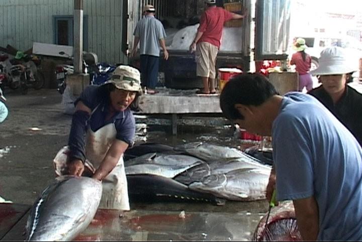 Экспериментальная модель производства консервированного тунца в провинции Фуйен - ảnh 1